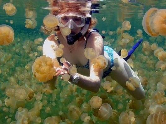 lac meduze Micronezia