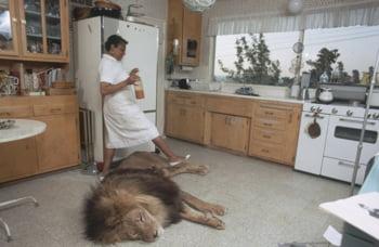 melanie griffith leu animal companie