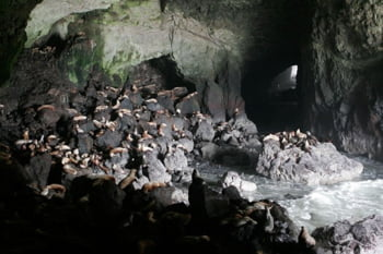 O lume necunoscuta subacvatica: Pesteri sculptate de apa (Galerie foto)