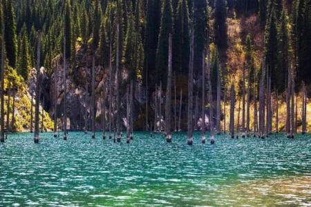 padure acoperita lac Kazahstan