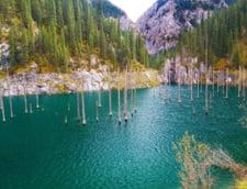 padure acoperita lac