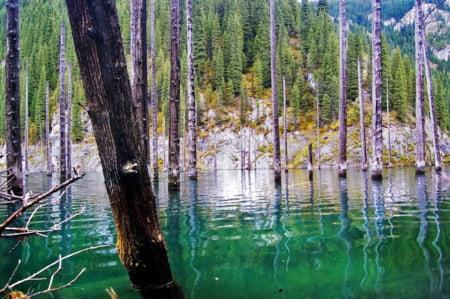 padure scufundata Kazahstan poze