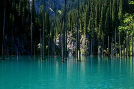padure scufundata lac imagini
