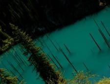 padure scufundata lac
