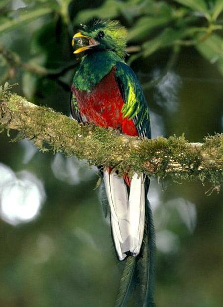 Pasarea quetzal