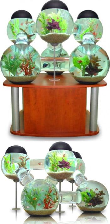 Set de acvarii conectate intre ele