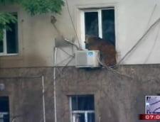 urs Tbilisi