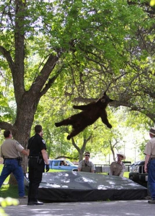urs cade copac
