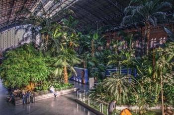 Vegetatie luxurianta tropicala