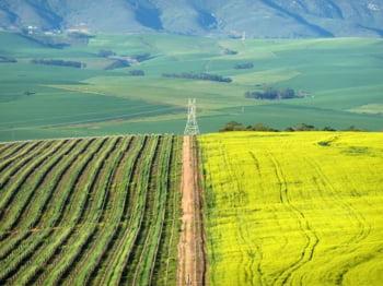 Vita de vie din Cape Winelands Africa de Sud